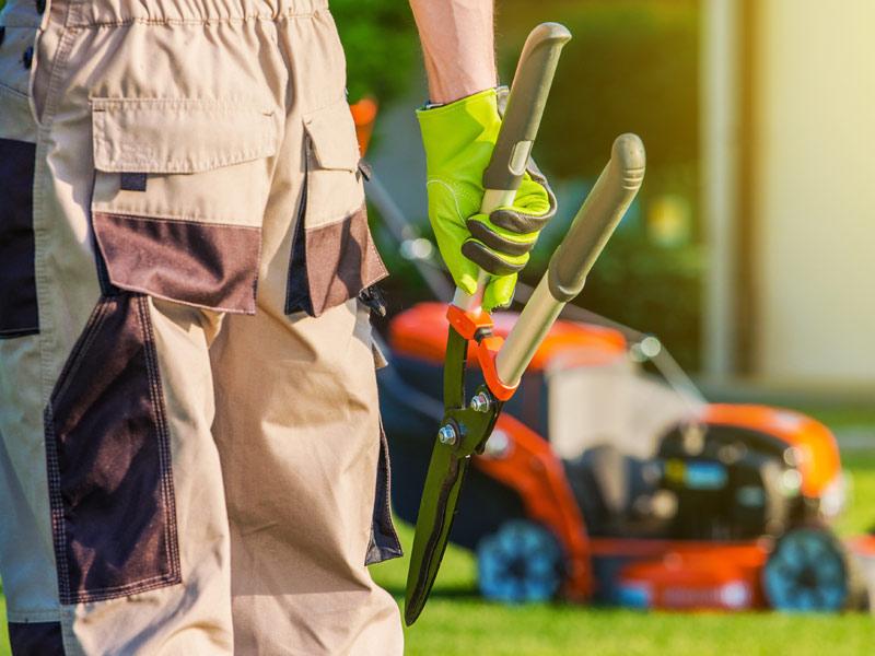 pflege und gehölzrückschnitte gärtner kleve niederrhein goch